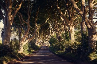 dark hedges, game of thrones, northern ireland, uk, roadtrip